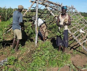 Bauern breiten ihre Erdnussernte zum Trocknen auf einem Holzgestell aus. © Welthungerhilfe