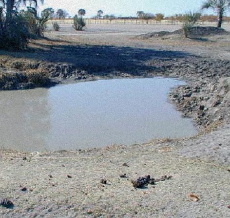 Wasserstelle - für Tier und Mensch